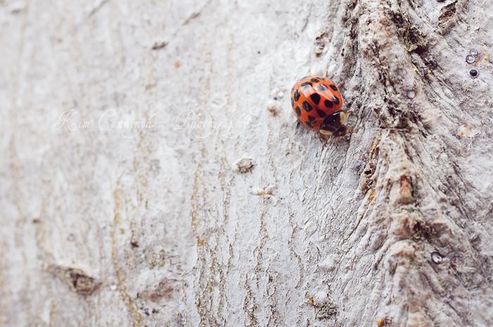ladybug-web